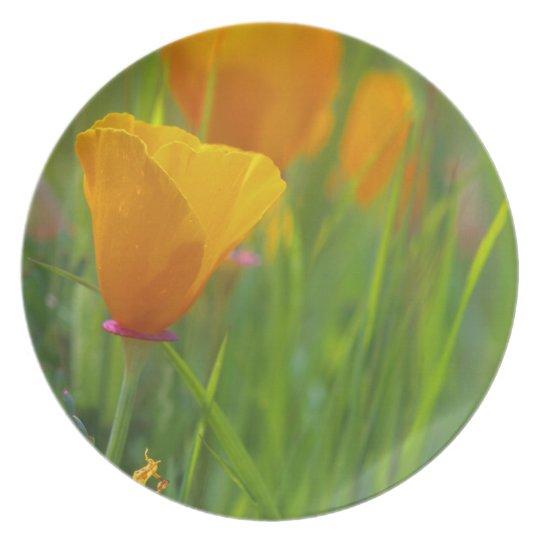 California golden poppies in a green field dinner plate
