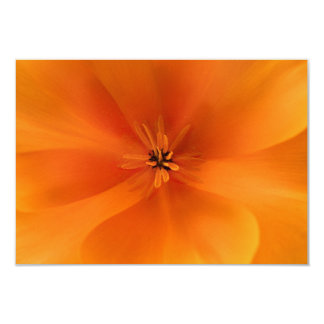 California Golden Poppy Macro Card