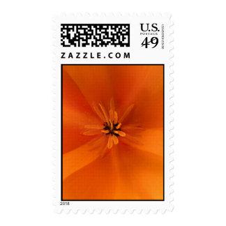 California Golden Poppy Macro Postage Stamps