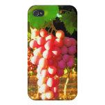 California Grapes iPhone 4G Case iPhone 4 Case
