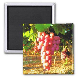 California Grapes Magnet
