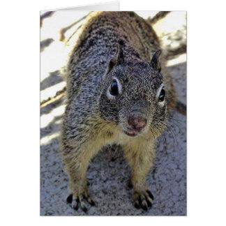 California Ground Squirrel Greeting Cards