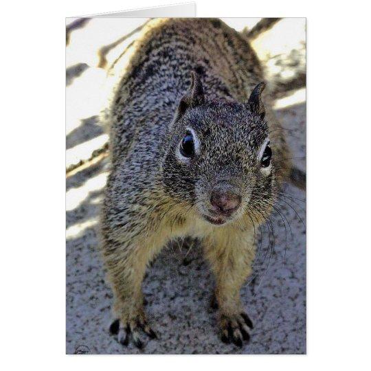 California Ground Squirrel Card