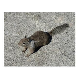 California Ground Squirrel Postcard