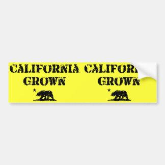 California Grown Bear Bumper Sticker