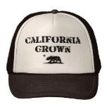 California Grown Bear Mesh Hat