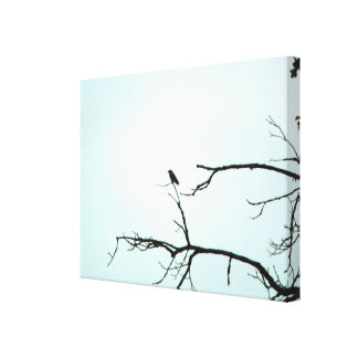 California Hummingbird Gallery Wrapped Canvas