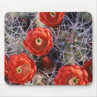 California, Joshua Tree National Park, Claret Mouse Pad