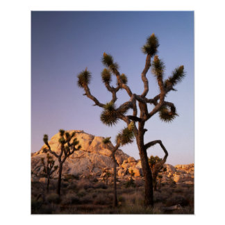 California, Joshua Tree National Park, Joshua Poster