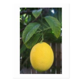 California Lemon Postcard