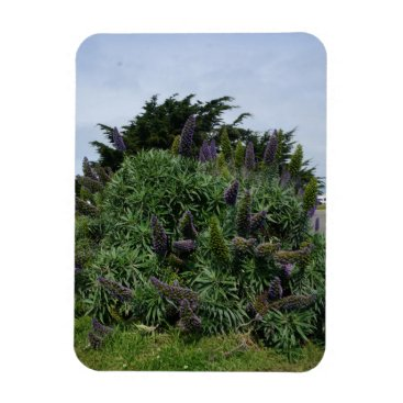Beach Themed California Lilac Photo Magnet