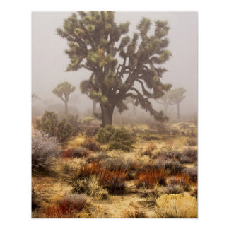 California: Monumento nacional de la yuca, Posters