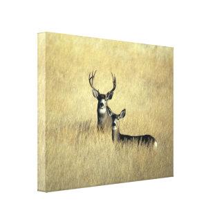 California Mule Deer Wrapped Canvas Art