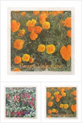 California Native Plants: Celebration Coasters