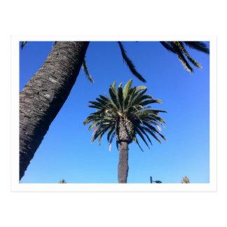 California Palm Postcard