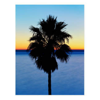 California Palm Tree and Pacific Ocean Sunset Postcard