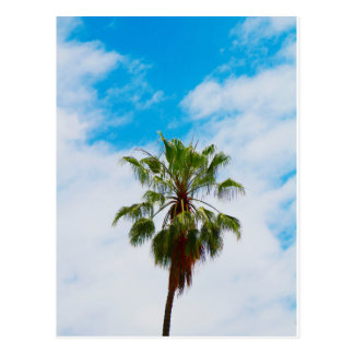 California Palm Tree Postcard