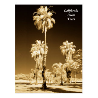 California Palm Trees Infrared Post Card