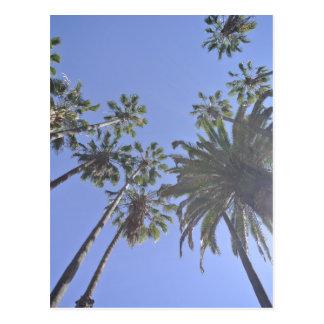 California Palm Trees Postcard