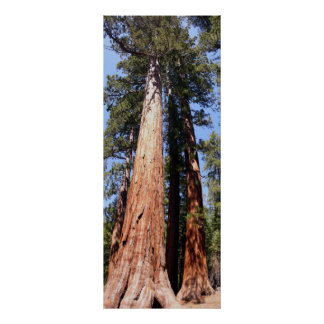 California Panoramic 1 Poster
