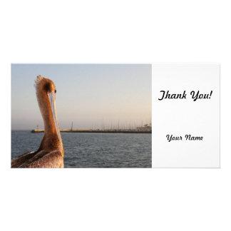 California Pelican Photo Card