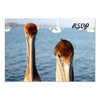 California Pelicans Card