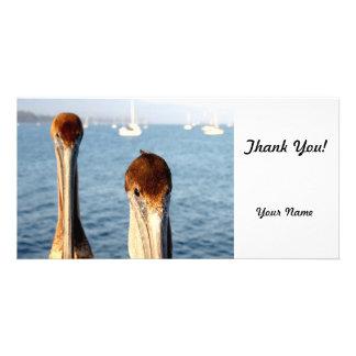 California Pelicans Photo Greeting Card