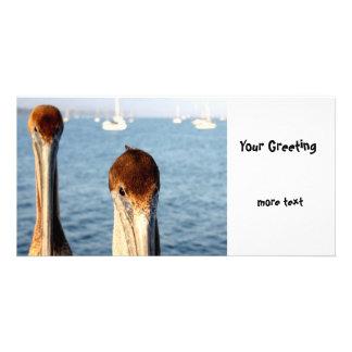 California Pelicans Photo Card