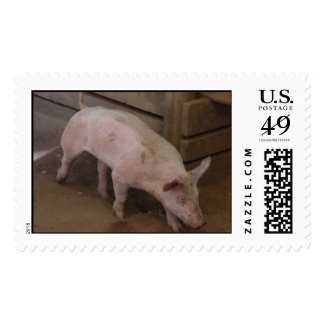California Pig Postage