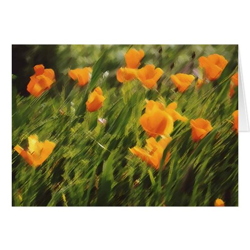 California Poppies 01 Greeting Cards