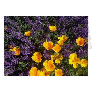 California Poppies and Nepeta Card