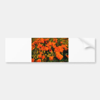 California Poppies Bumper Stickers