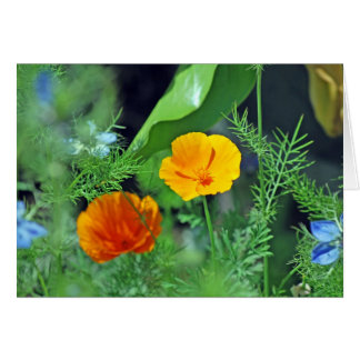 California Poppies Card