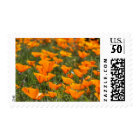 California Poppies Field Postage Stamps
