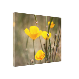 California Poppies Gallery Wrapped Canvas Print