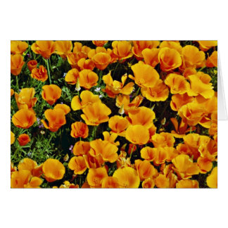 California poppies in bloom, Lancaster, California Greeting Cards