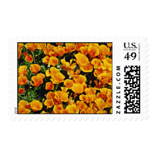 California poppies in bloom, Lancaster, California Postage Stamps