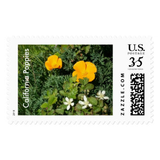 California Poppies in Spring Stamp
