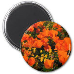 California Poppies Magnet