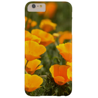 California poppies, Montana de Oro State Park Barely There iPhone 6 Plus Case
