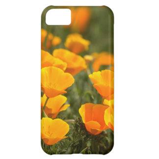 California poppies, Montana de Oro State Park iPhone 5C Case