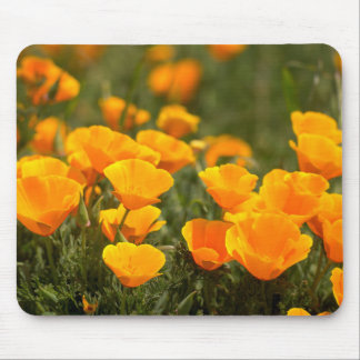 California poppies, Montana de Oro State Park Mouse Pad