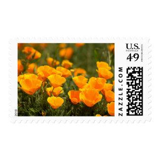 California poppies, Montana de Oro State Park Postage