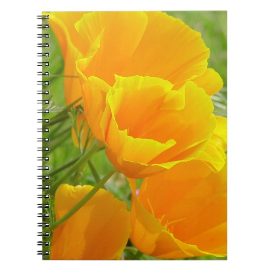 California Poppies Notebook