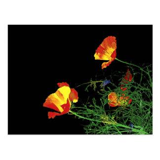 California poppies on black postcard