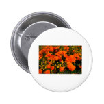 California Poppies Pinback Buttons