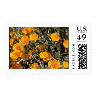 California Poppies Postage Stamp