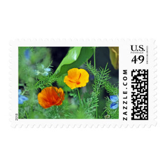 California Poppies Postage Stamps