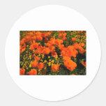 California Poppies Round Stickers