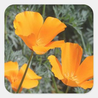 California Poppies Square Sticker